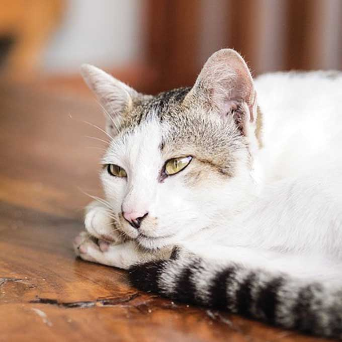 Q. 고양이가 졸릴 때 하는 행동 6