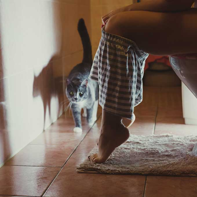 고양이가 화장실까지 따라 들어오는 이유 4