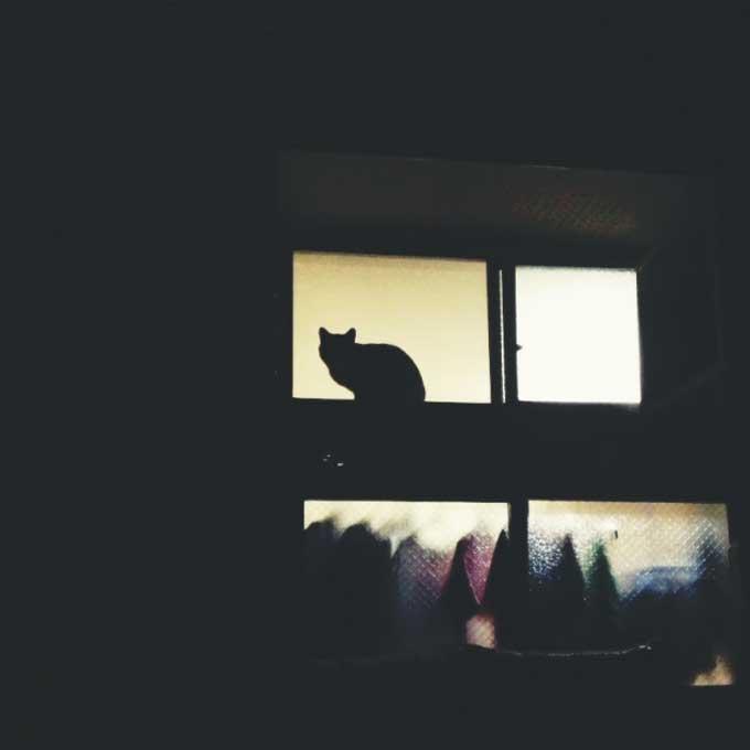 Q. 고양이는 야행성 아님, 그럼에도 오밤중에 낮처럼 활동하는 이유 3