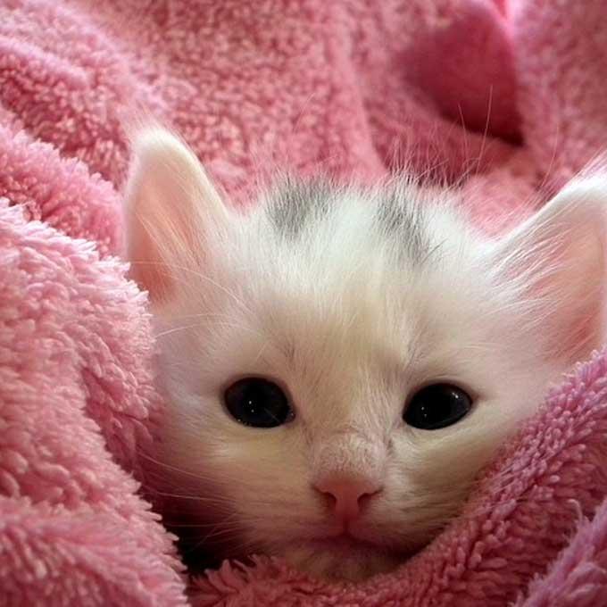 Q. 고양이가 좋아하는 색과 싫어하는 색은?