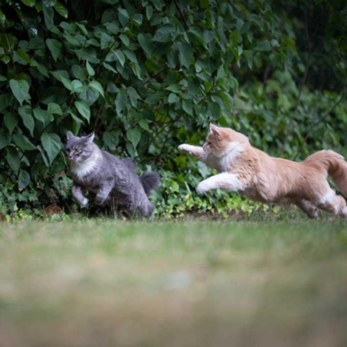 자신이 대장 고양이라고 생각하는 고양이가 다른 냥한테 하는 행동 4