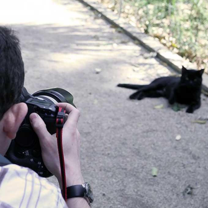 Q. 왜 고양이는 카메라를 싫어할까