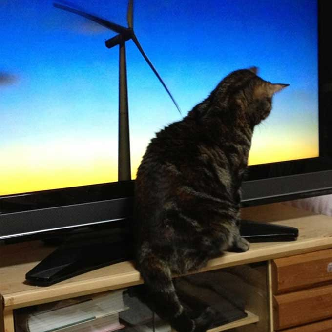 Q. 고양이가 TV를 볼 때는 어떤 기분일까?
