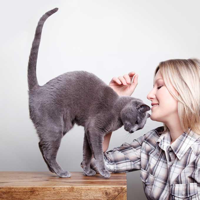 """""""안녕하세요"""", 고양이가 집사에게 하는 인사법 7"""