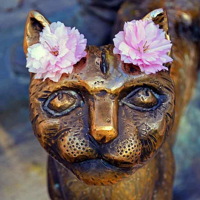 Q. 중성화수술을 받은 고양이는 성 정체성의 혼란을 느낄까