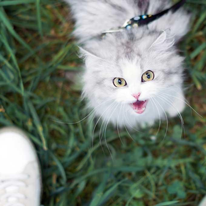 """고양이가 집사한테 """"야옹""""하며 말 걸어올 때 마음"""