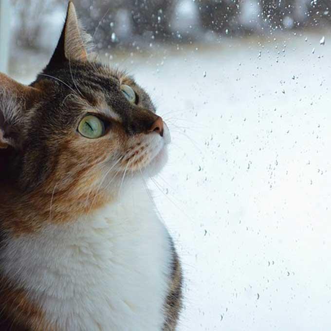 Q. 고양이가 비올 때 잠을 더 많이 자는 이유 4