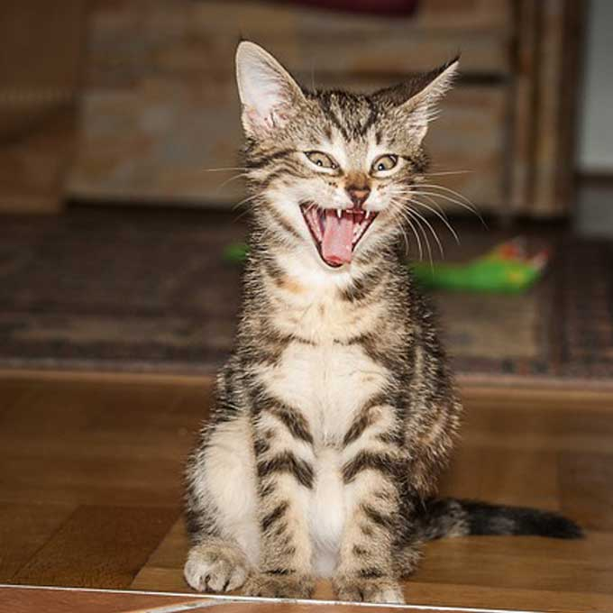 고양이가 분위기가 어색하면 하는 행동 5