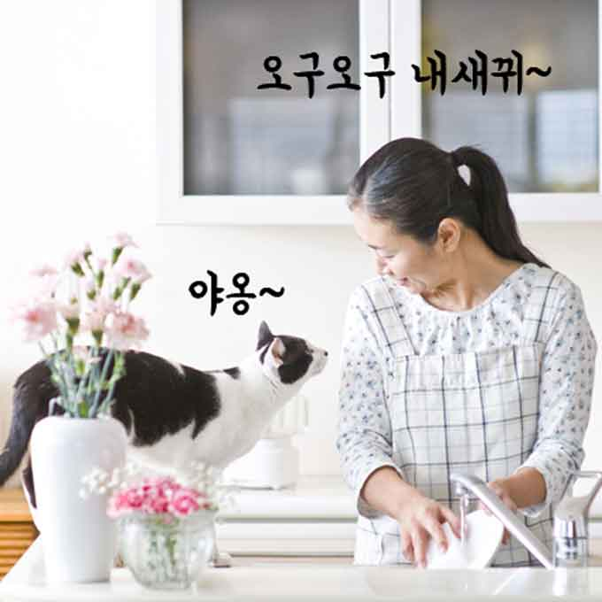 가족 중에서도 고양이가 특히 좋아하는 사람에게만 한다는 행동 3