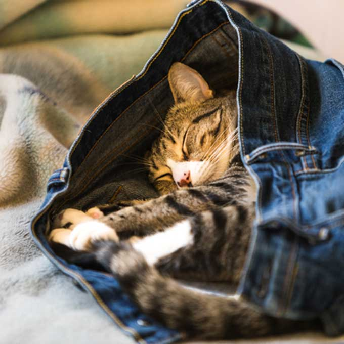 Q. 고양이가 집사 옷 위에서 잘 때 마음 4