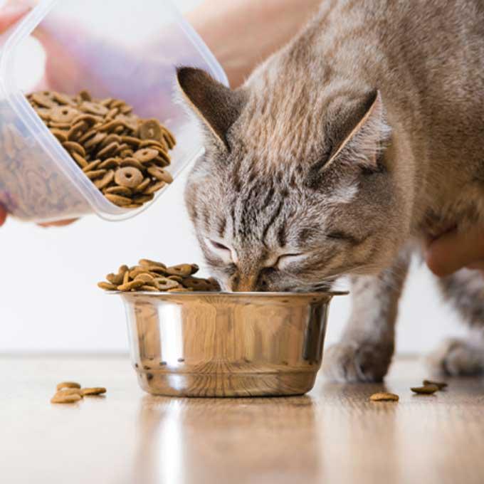 Q. 고양이가 비정상적으로 밥을 많이 먹을 때 이유 5