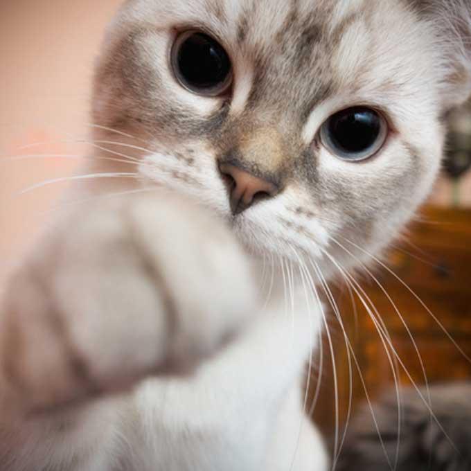 Q. 보복? 집사가 맘에 안 들 때 고양이가 하는 반격 행동 4
