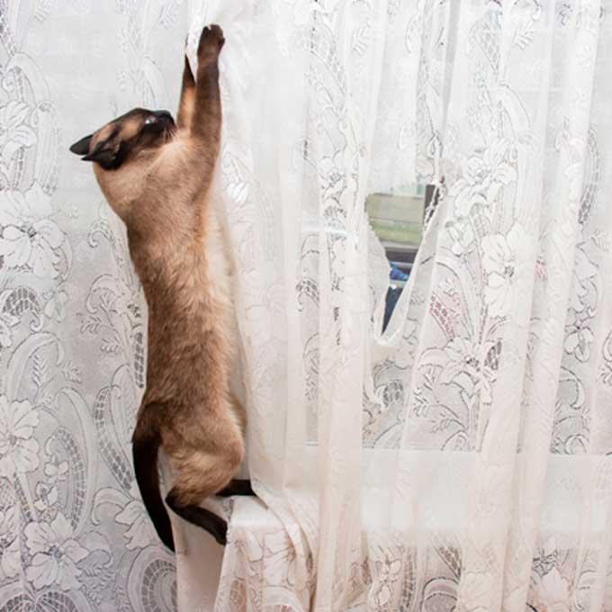 Q. 겅중겅중, 고양이가 커튼을 탈 때의 마음 3