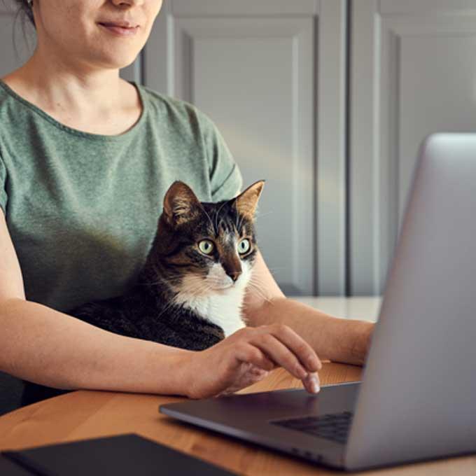 Q. 고양이가 재택근무하는 집사를 열심히 방해할 때 마음 4