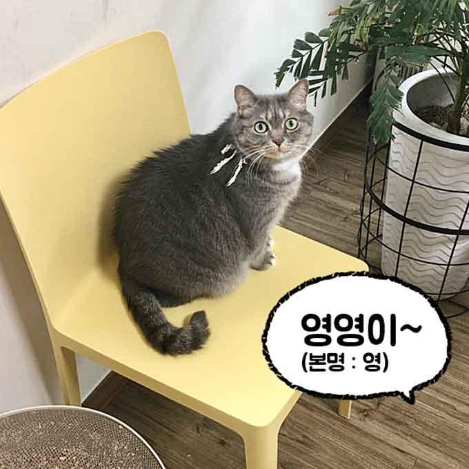 고양이는 '이름'과 '별명(애칭)'을 구분할 수 있을까