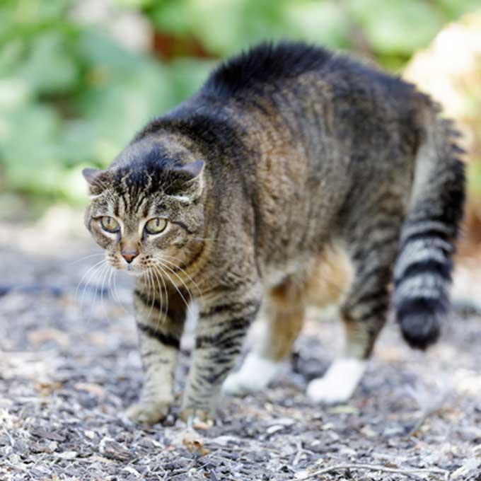 꼬리만이 아니고! 고양이가 온몸의 털을 곤두세울 때 기분 6