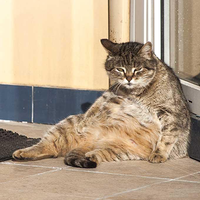 고양이가 뒷다리를 쭉 뻗고 앉는 이유와 이때의 유형 3
