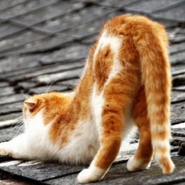 Q. 사람들이 잘 모르는 고양이 꼬리에 관한 비밀 6