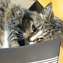 Q. 고양이가 작은 종이상자에 집착하는 까닭