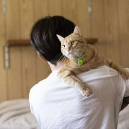 Q. 고양이가 안기기 싫어하는 이유 4