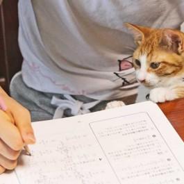 Q. 당신의 고양이가 무릎냥이 되는 몇 가지 이유