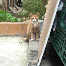 Q.  일명 '간택', 처음 보는 길고양이가 나를 따라오는 까닭