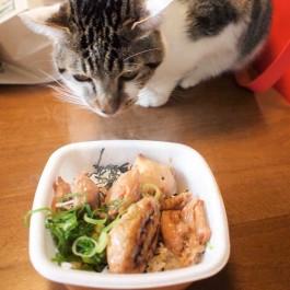 Q. 고양이가 집사 밥을 먹고 싶어 하는 이유 3