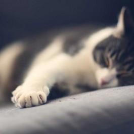 Q. 고양이의 마지막 모습은…