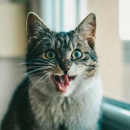 Q. 지진 나기 전 일본 고양이가 한 행동 5