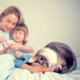 Q. 고양이가 먼저 집사를 유혹해 오는 타이밍 3
