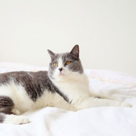 집사와 눈이 마주쳤을 때 고양이가 시선을 돌리는 이유 5