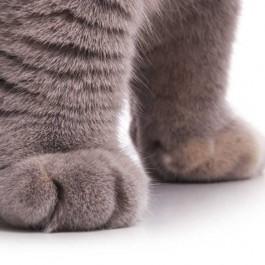 그 작고 귀여운 고양이 육구(젤리)가 하는 일 4