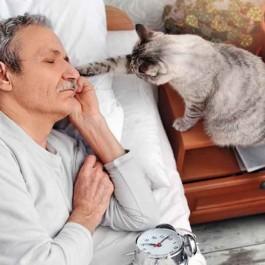 Q. 고양이가 자는 집사를 깨울 때 마음 6