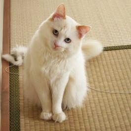 Q. 고양이가 고개를 갸우뚱하는 이유 4