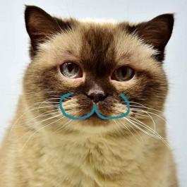 Q. 고양이 'ω'라고 뭐라고? 구조와 역할도 제대로 알자