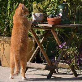 Q. 고양이가 뒷다리로만 서 있을 때 마음 5