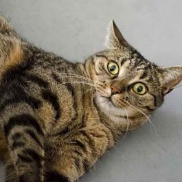 Q. 냥님은 다중인격? 고양이의 기분이 갑자기 바뀌는 까닭