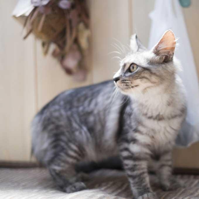 집사가 이름 불렀을 때, 고양이가 대답하는 방법7