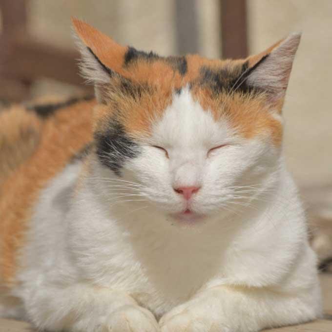 가늘어진 허벅지…, 외모에서 나타나는 고양이 노화 증상 4