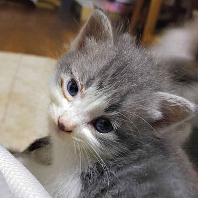 고양이가 면역력이 약해졌을 때 나타나는 대표 증상 3