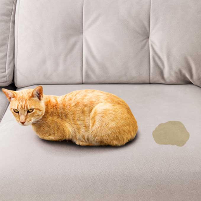 고양이가 스트레스받을 때 가장 먼저 하는 행동 5