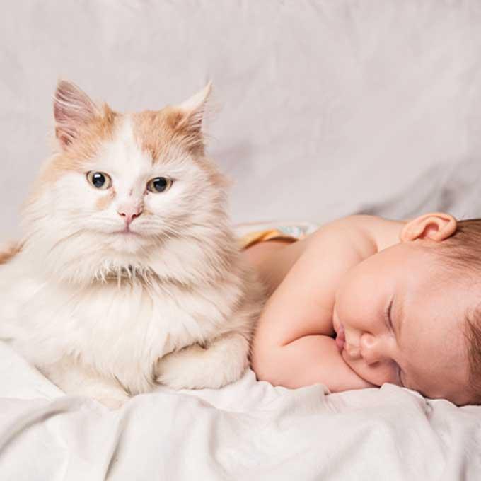 """""""친한 엄마 냥끼리는 공동 육아함"""", 고양이가 얼마나 모성애가 강하냐면"""