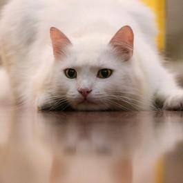 잘 놀아야 행복하다, 고양이와 놀아줄 때 지켜야할 7대 핵심수칙