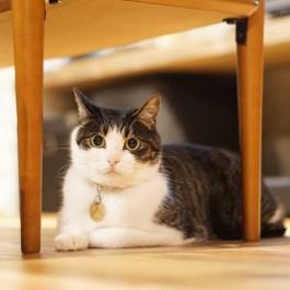 한국 집사가 가장 많이 모시는 고양이는 코숏