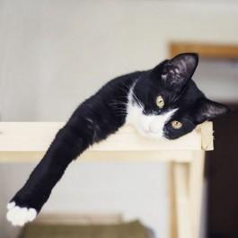 """""""고양이는 언제나 옳다!"""" 과학자들이 증명한 반려묘의 중요성 8"""