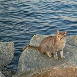 오염된 미국 바다를 살릴 수 있었던 고양이 털