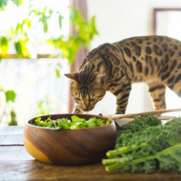 고양이에게 줘도 좋은 명절 음식 5