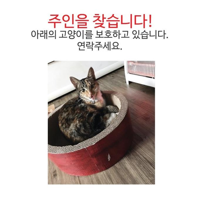 또 길고양이..., 그리고 동탄누리동물병원
