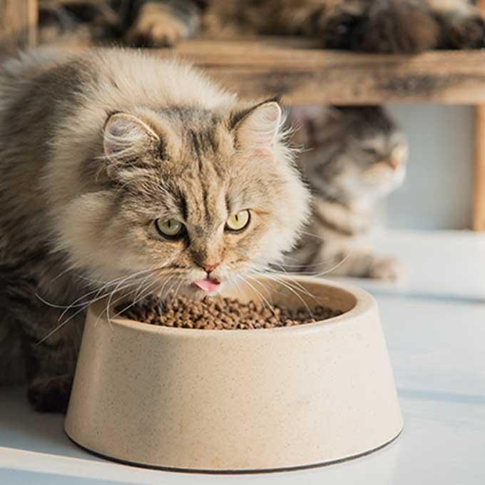 고양이가 '밥 먹기 참 좋다'고 느끼는 장소 특징 5