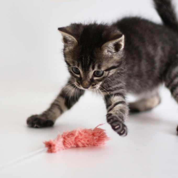 소재·모양·소리·컬러까지, 고양이가 좋아하는 장난감 특징 5